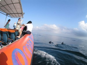 Dolphins close-by