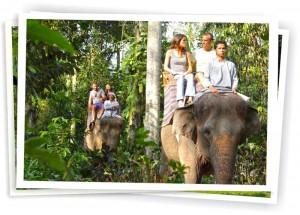 elephant_3l